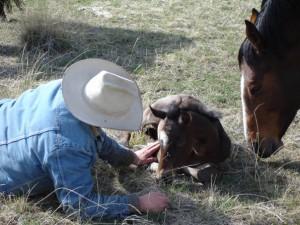 A genuine Montana Cowboy, Chase Krone