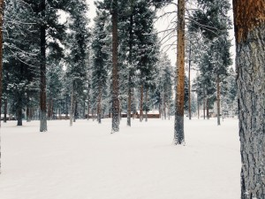 If I'm missing, it's because I'm snuggled up in one of these cabins at Double Arrow Lodge.