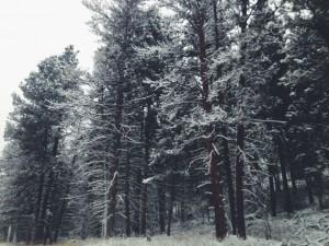 Montana is a winter wonderland.