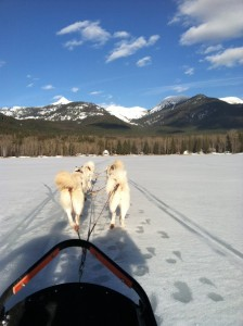 Dog sledding (my first time!) on Swan Lake.
