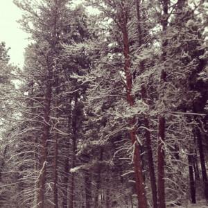 Welcoming winter.