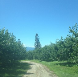 The road to the house winds through a cherry orchard.
