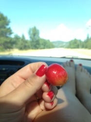 Munching on locally grown cherries.